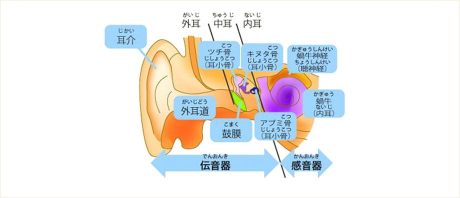 耳は「外耳」「中耳」「内耳」に分けられます